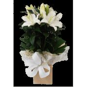 Vaso de Lírio branco