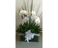 Orquídeas em cachepot de vidro