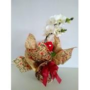 Orquídea Phalaenopsis  especial
